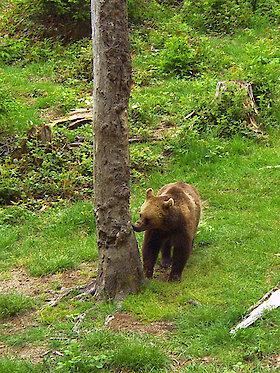 Tierfreigehege Nationalpark Bayerischer Wald