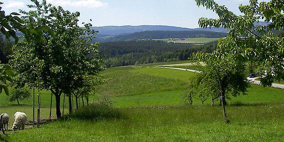 Herrlicher Garten mit Obstbäumen