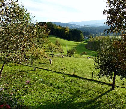 herrliche Aussicht von den Ferienwohnungen Weghofer im Bayerischen Wald