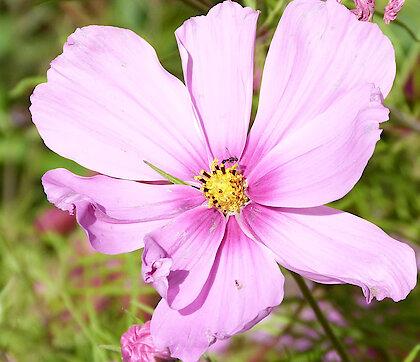 Blume - Urlaub in der Ferienwohnung Weghofer