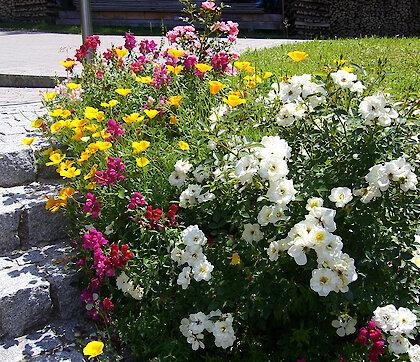 wunderschöne Blumen - Fewo Weghofer